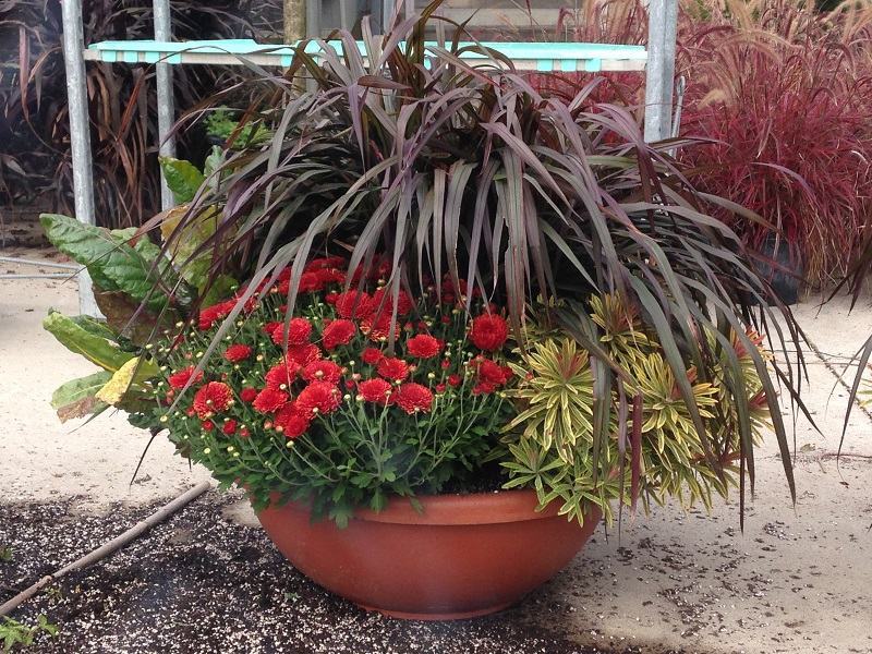 Fall combination planter